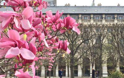 Jardin du Palais-Royal, il paradiso dei sognatori