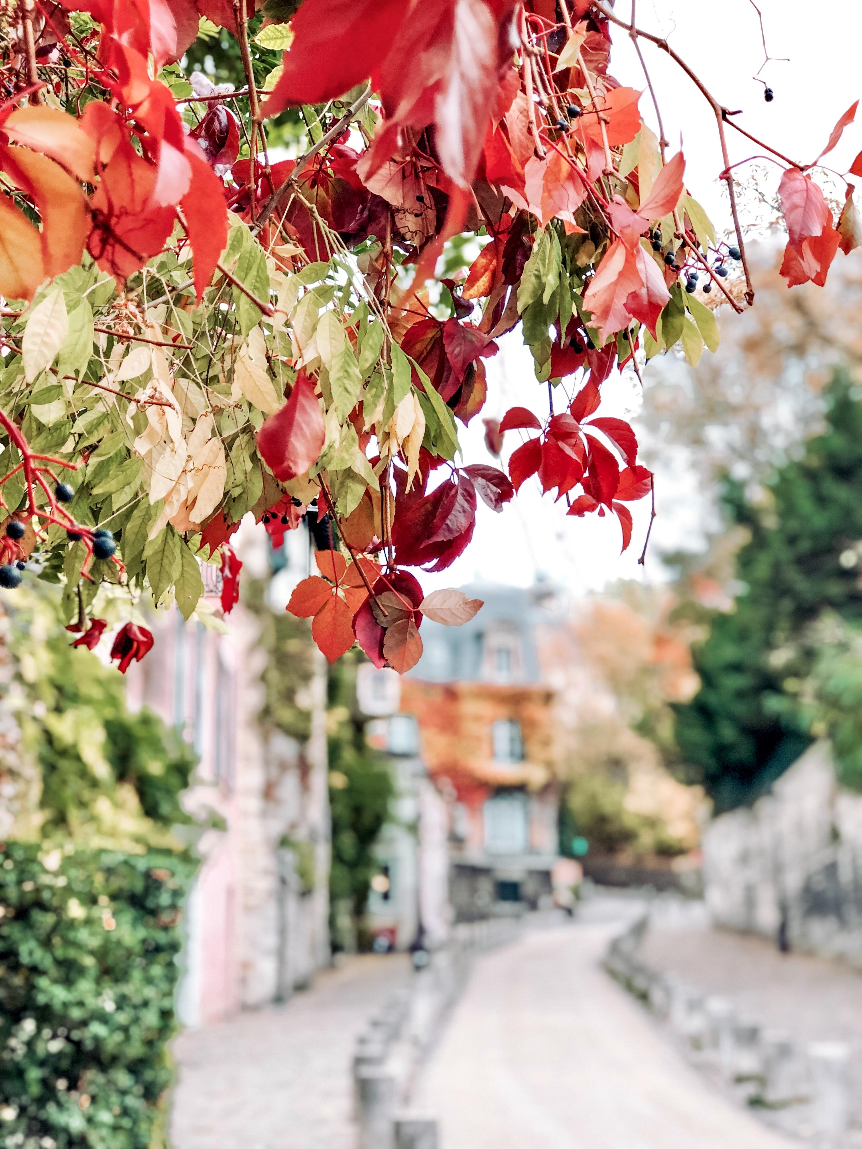 Parigi in autunno, jardin de luxembourg, Impastastorie, impastastorie bistrot, autumn in paris, Montmartre
